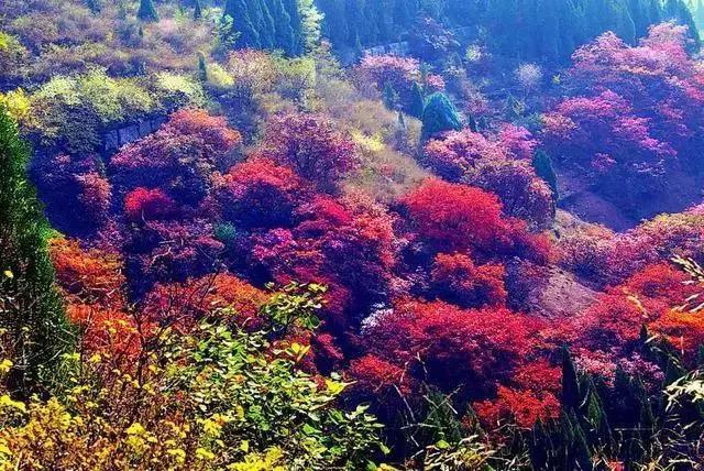 中国各省赏秋景最佳去处,趁秋天还在!