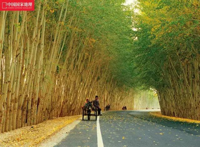 不去新疆自驾一次,你不会知道中国的秋天有多美!