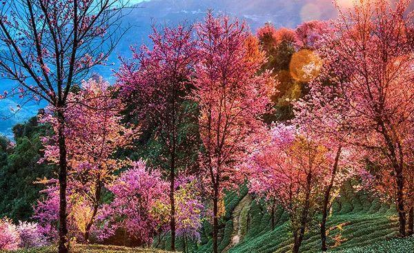 这里有中国最早的春天,即将花开成海!美如仙境!